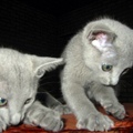 pictures of kittens playing
